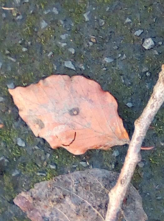 leaf smile 2018